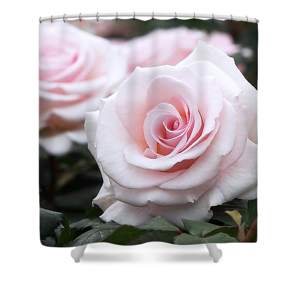 Blush Pink Roses Shower Curtain