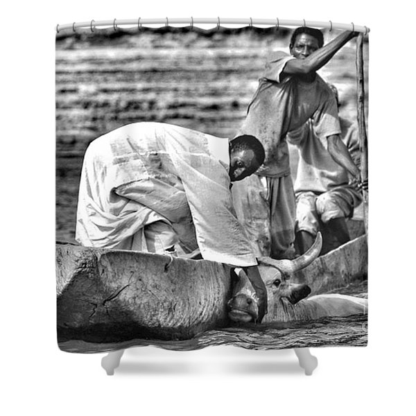 Boat And Cow  Shower Curtain