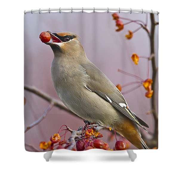 Bohemian Waxwing With Fruit Shower Curtain