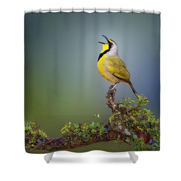 Bokmakierie Bird - Telophorus Zeylonus Shower Curtain