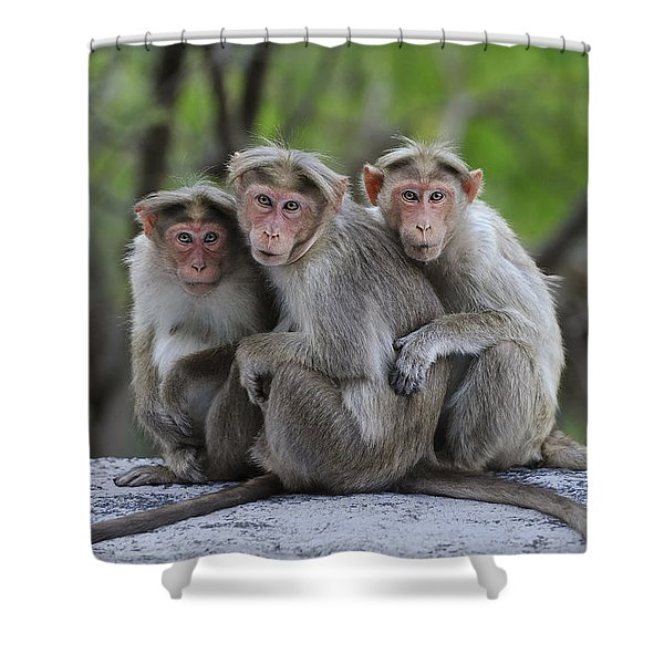 Bonnet Macaque Trio Huddling India Shower Curtain