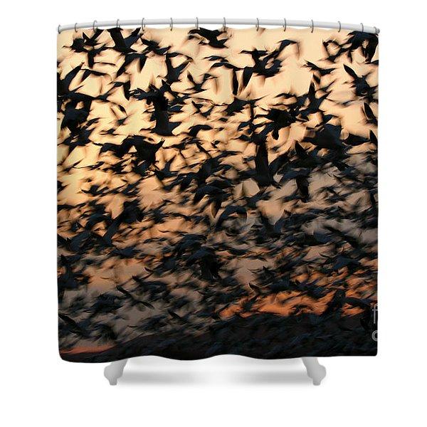 Bosque Sunrise Blastoff Shower Curtain