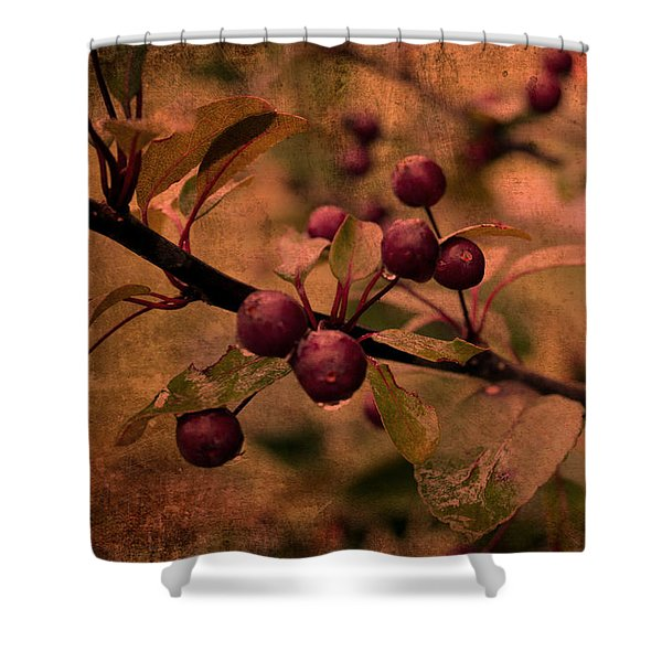 Bradford Pear Tree Seed Pods Shower Curtain