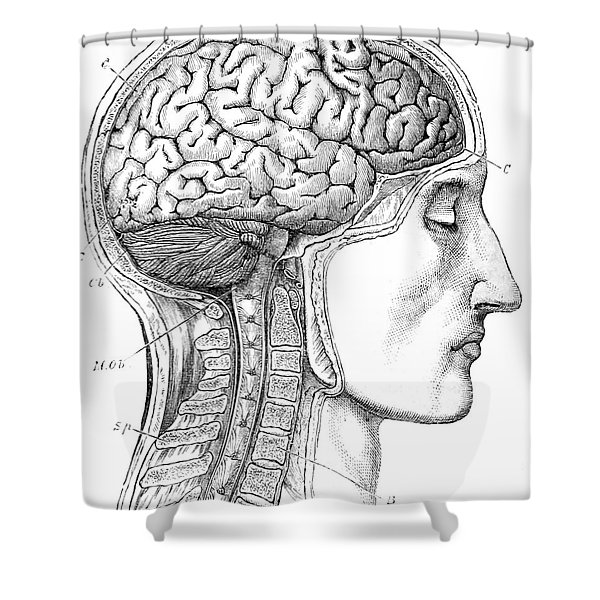 Brain From Right Side, 1883 Shower Curtain