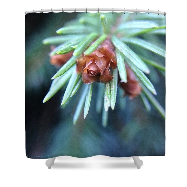 Branch Tips II Blue Spruce Shower Curtain