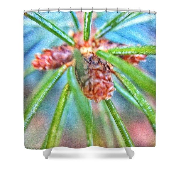 Branch Tips IIi Douglas Fir Shower Curtain