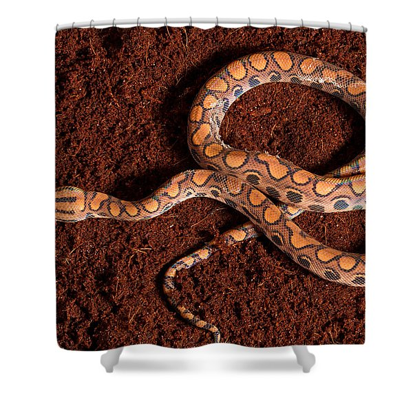 Brazilian Rainbow Boa Shower Curtain