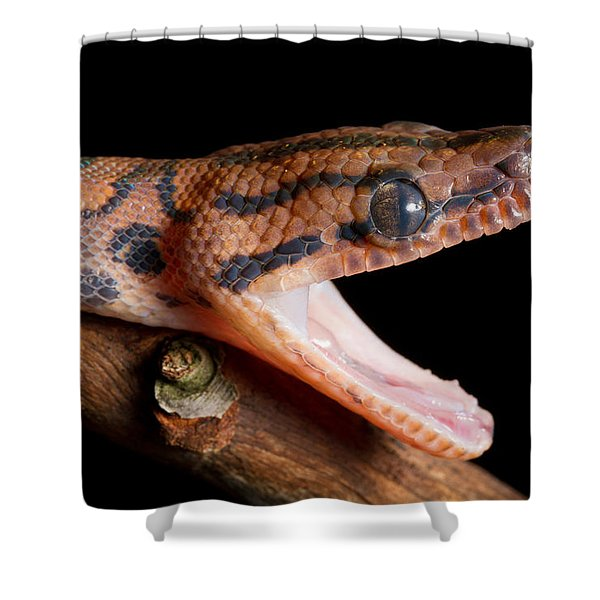 Brazilian Rainbow Boa Stretching Jaw Shower Curtain