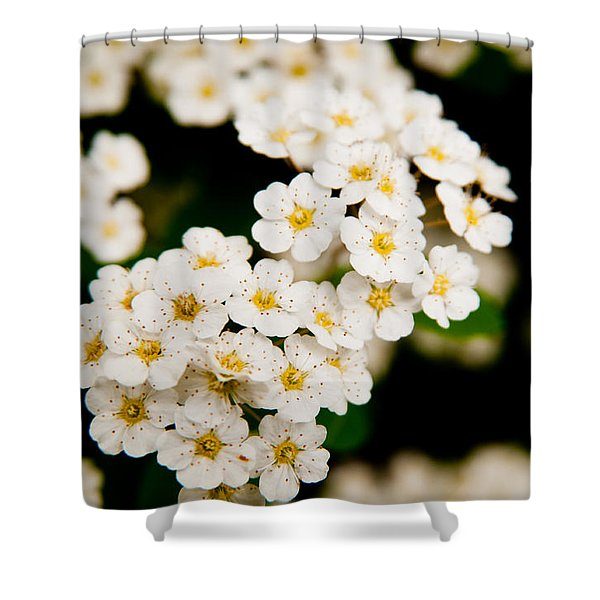 Bridal Veil Spirea Shower Curtain