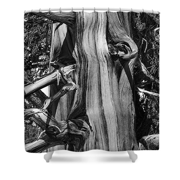 Shower Curtain featuring the photograph Bristle-cone Pine-2 by Mae Wertz