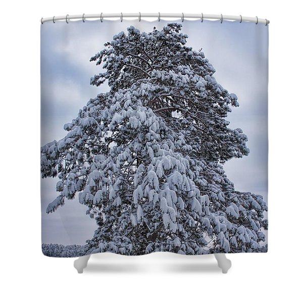 Buck Lake Flocked Pine Shower Curtain