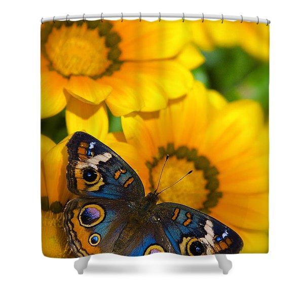 Buckeye Butterfly In All It's Beauty  Shower Curtain