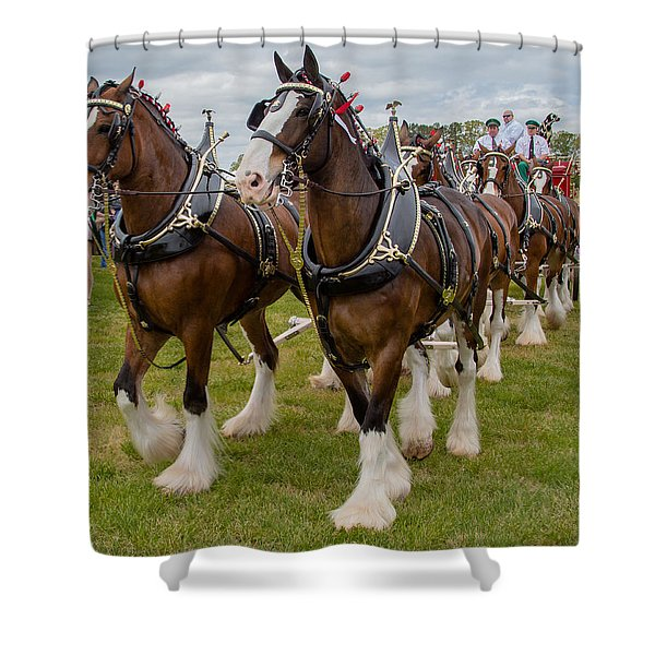 Shower Curtain featuring the photograph Budweiser Clydesdales by Robert L Jackson