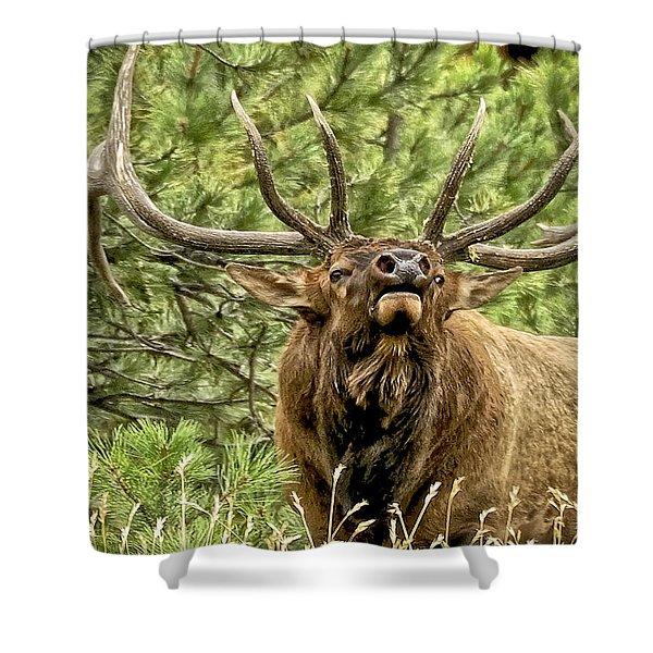 Bugling Bull Elk II Shower Curtain