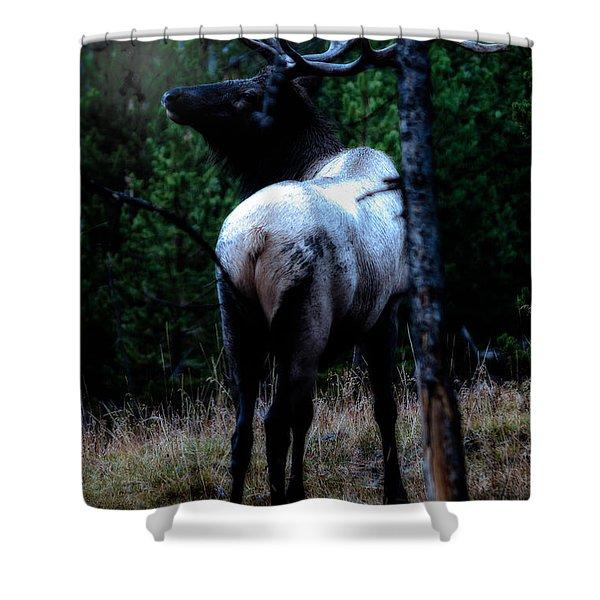 Bull Elk In Moonlight  Shower Curtain