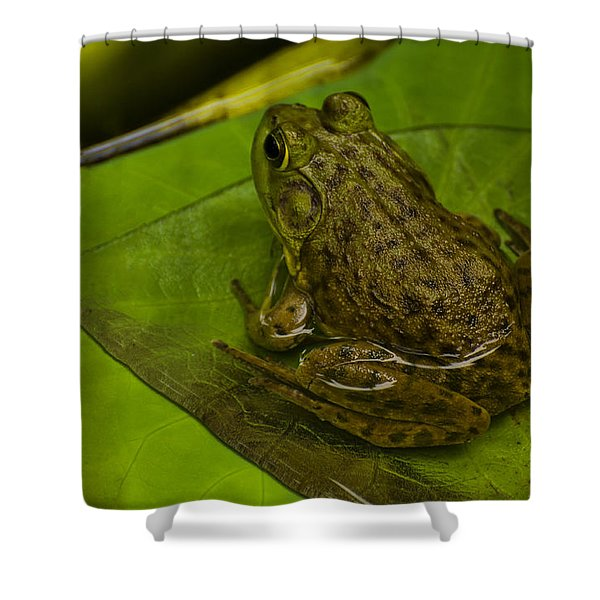 bull frog on a Lilly pad Shower Curtain