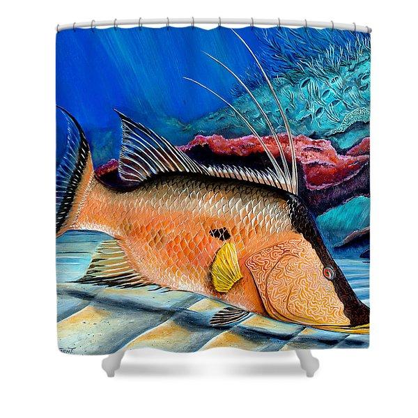 Bull Hogfish Shower Curtain