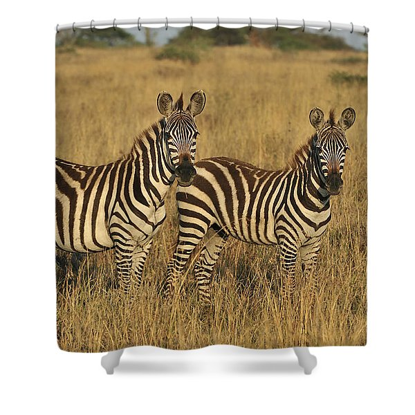 Burchells Zebraon Savanna Serengeti Shower Curtain
