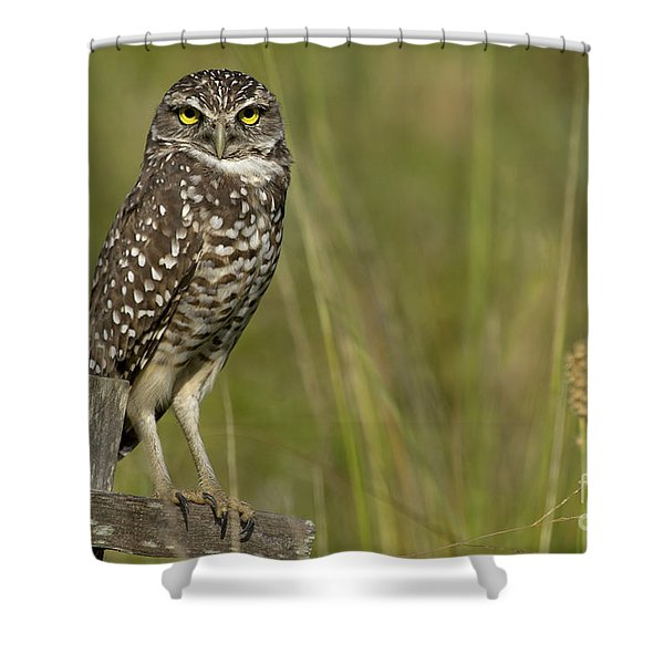 Burrowing Owl Stare Shower Curtain