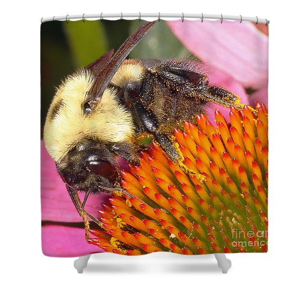 Busy Busy Shower Curtain