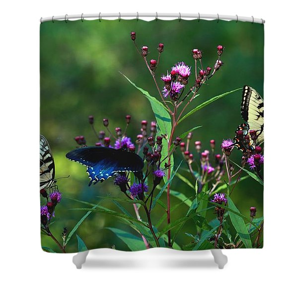 Butterflies Three Shower Curtain