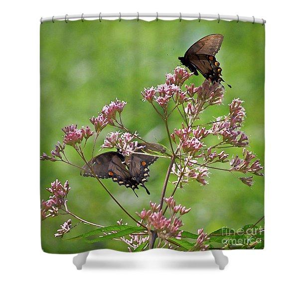 Butterfly Duet  Shower Curtain