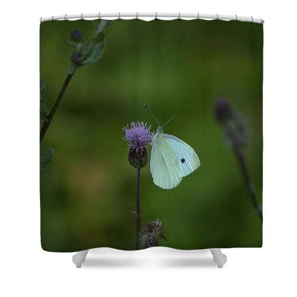 Butterfly In White 2 Shower Curtain