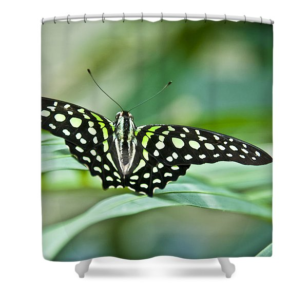 Butterfly Resting Color Shower Curtain
