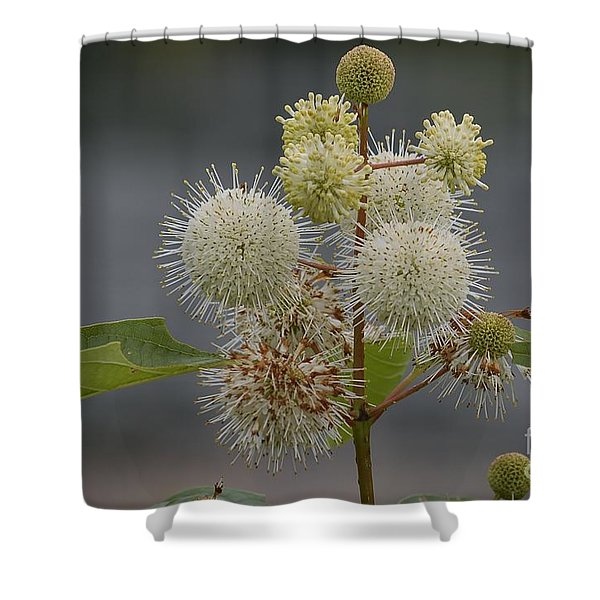 Buttonbush Shower Curtain