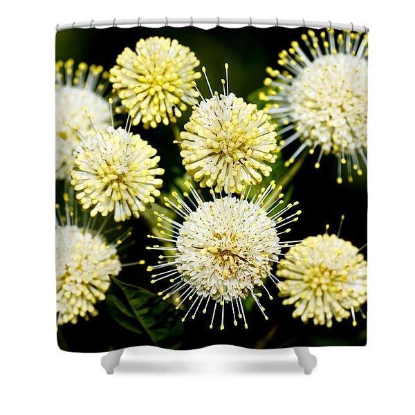 Buttonbush Shower Curtain