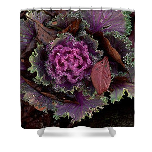 Cabbage With Butterfly Nebula Shower Curtain