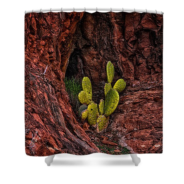 Cactus Dwelling Shower Curtain