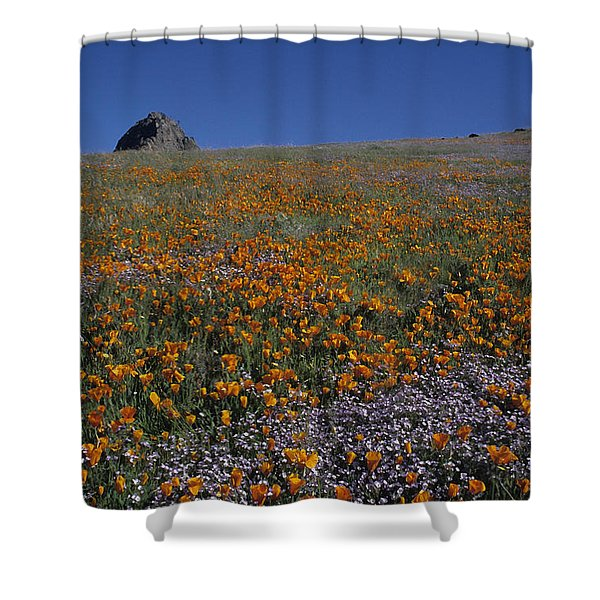 California Gold Poppies And Baby Blue Eyes Shower Curtain