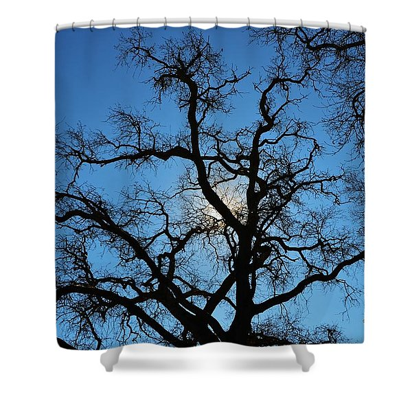 California Oak Sun Tree Shower Curtain