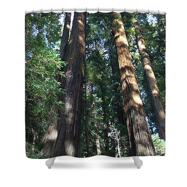 California Redwood Shower Curtain