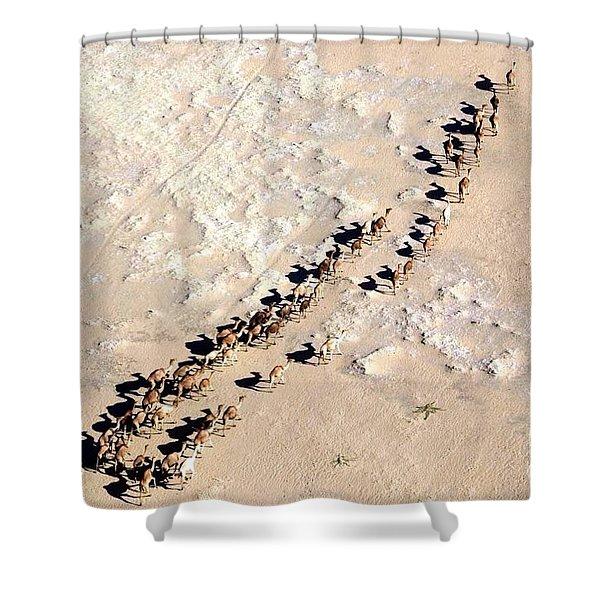 Camels Walking In Desert Shower Curtain