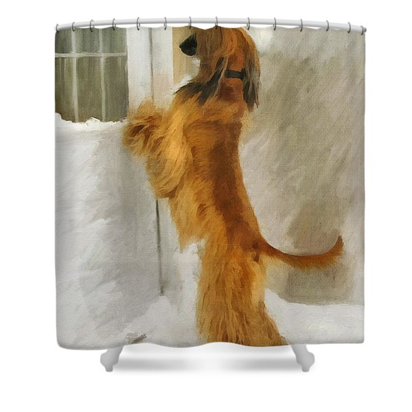 Can I Come In Now? Shower Curtain