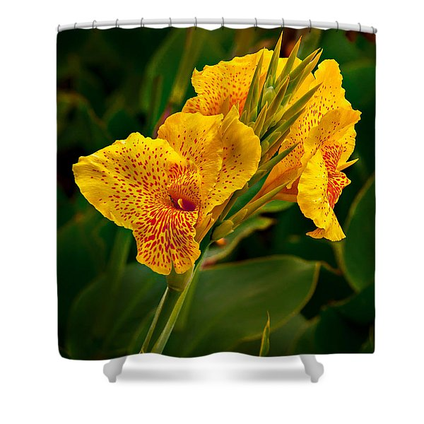 Shower Curtain featuring the photograph Canna Blossom by Mary Jo Allen