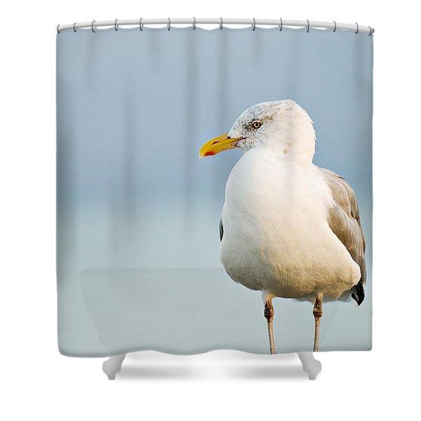 Cape Cod Seagull Shower Curtain
