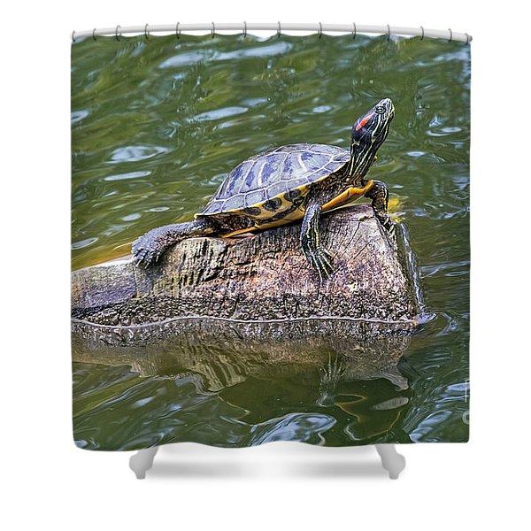 Captain Turtle Shower Curtain