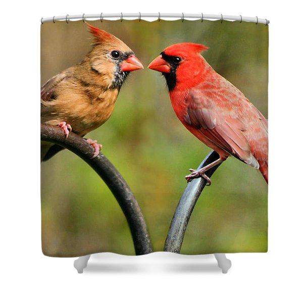 Cardinal Love Shower Curtain