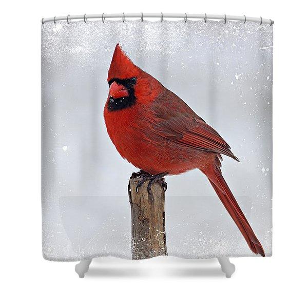 Cardinal Perching Shower Curtain