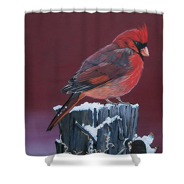 Cardinal Winter Songbird Shower Curtain