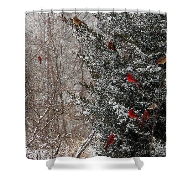 Cardinals In Winter 1 Square Shower Curtain