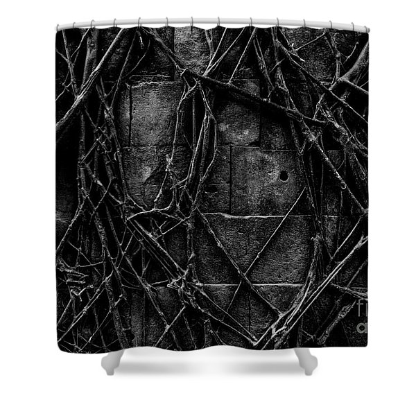 Caress Shower Curtain
