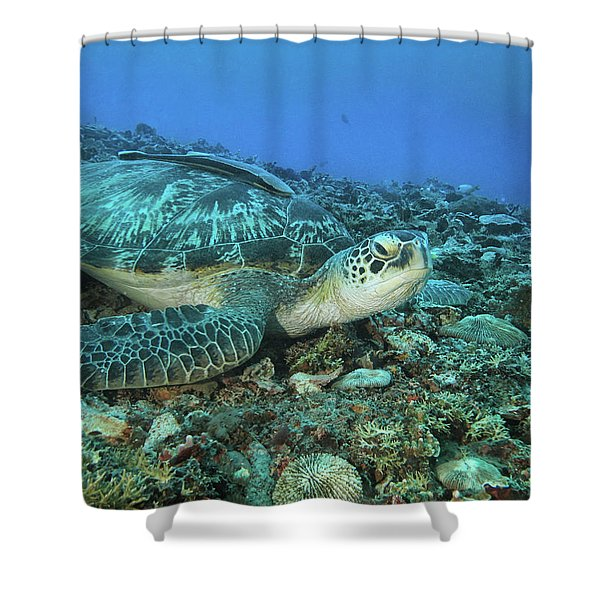 Caretta Resting On Stones Shower Curtain