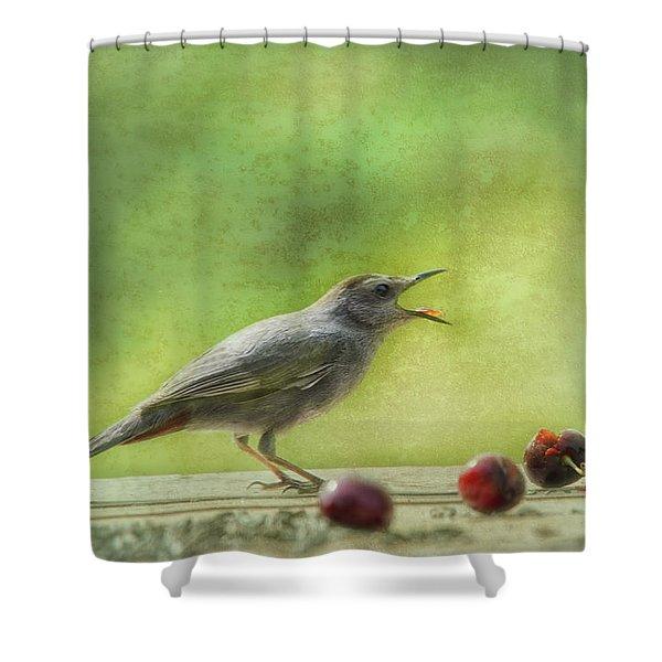Catbird Eating Cherries Shower Curtain
