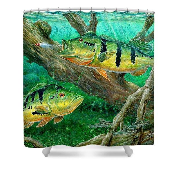 Catching Peacock Bass - Pavon Shower Curtain