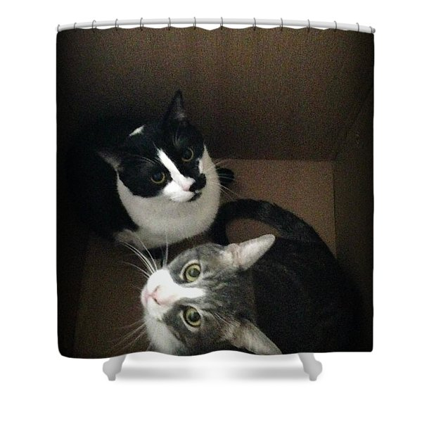 Tabby Cat Kitten Photography Pets  Shower Curtain