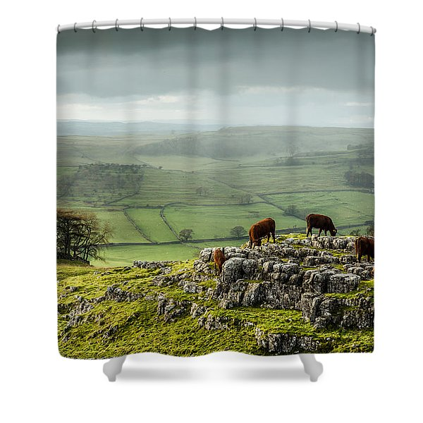Cattle In The Yorkshire Dales Shower Curtain